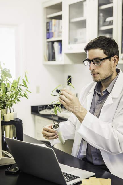 Wissenschaftler untersuchen die Pflanze im Labor an Pflanze Wachstum Forschungseinrichtung — Stockfoto