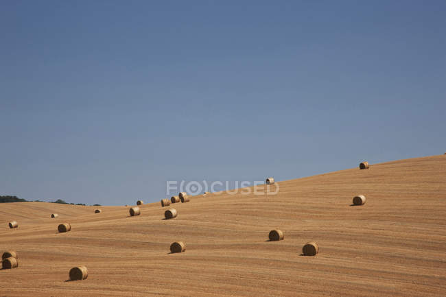 View of straw bales in harvested cornfield, Pienza, Val D'Orcia, Tuscany, Italy — Stock Photo