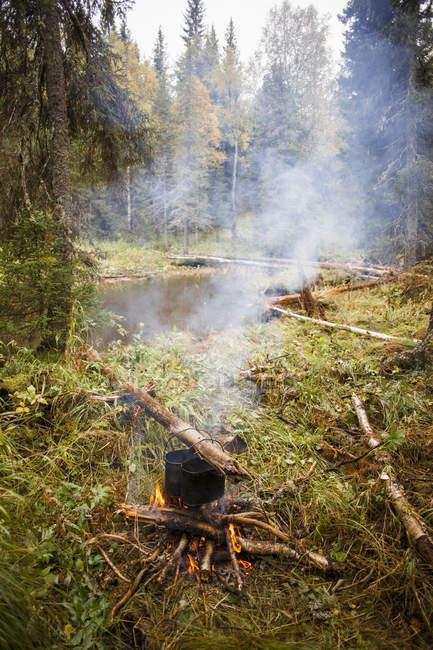 У костра в лесу, в деревне Sarsy — стоковое фото