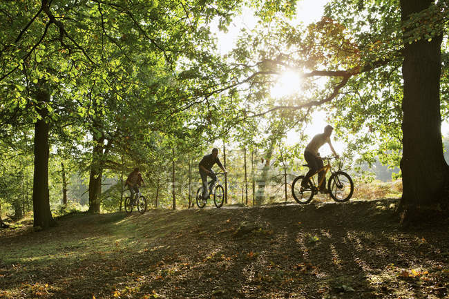 Three young men cycling in sunny woods — Stock Photo