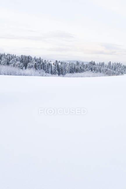 Paesaggio innevato — Foto stock