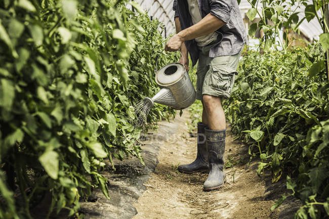 Cropped image of man watering plants with watering can at vegetable garden — Stock Photo