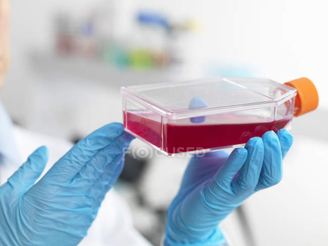 Biologist flask containing stem cells cultivated in red growth medium — Stock Photo