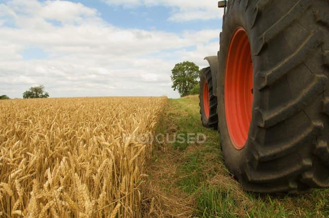 Roues de tracteur dans le champ de blé — Photo de stock