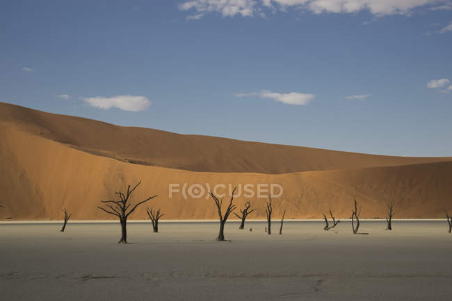 Alberi morti e dune di sabbia — Foto stock