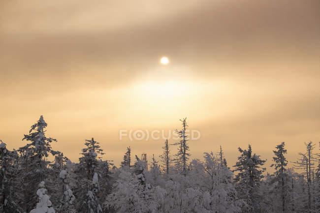 Vue des nuages d'orage et de la cime des arbres, sverdlovsk, Russie — Photo de stock