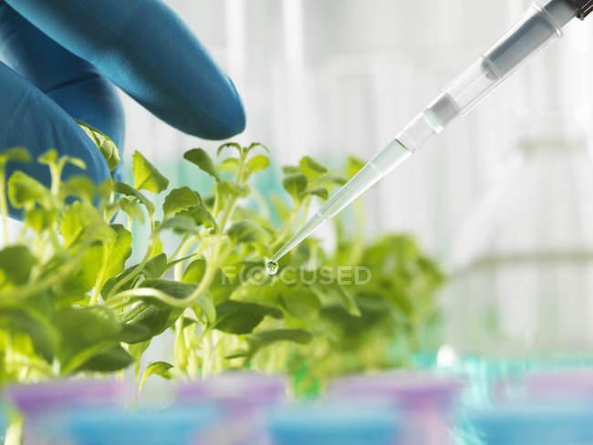 Рука учёного, пипетка экспериментального химиката в поднос для рассады — стоковое фото