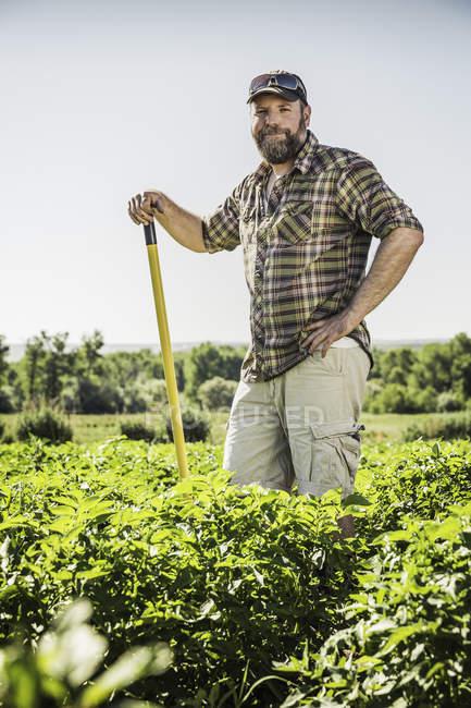 Bärtiger Mann im Gemüsebeet lehnt an Hacke und blickt lächelnd in die Kamera — Stockfoto