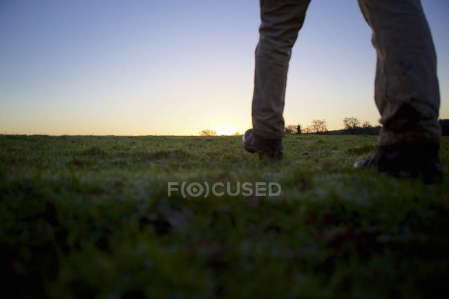 Legs of male hiker walking over field — Stock Photo