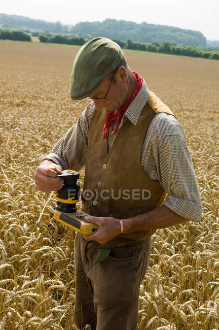 Mature farmer testing in field of wheat — Stock Photo