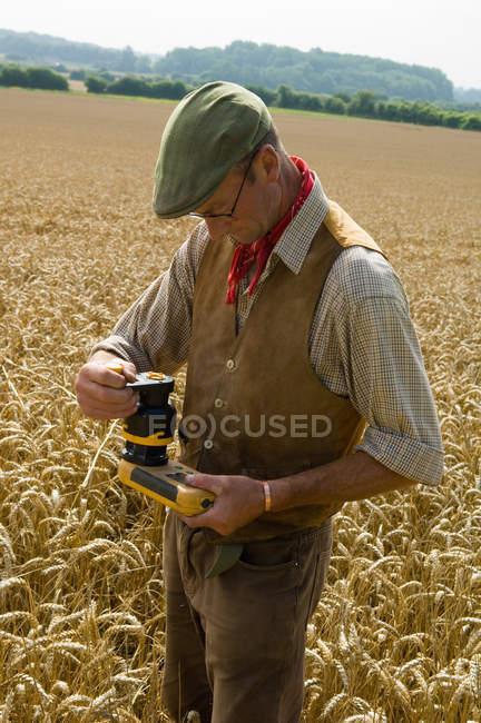 Des agriculteurs matures testent dans le champ de blé — Photo de stock