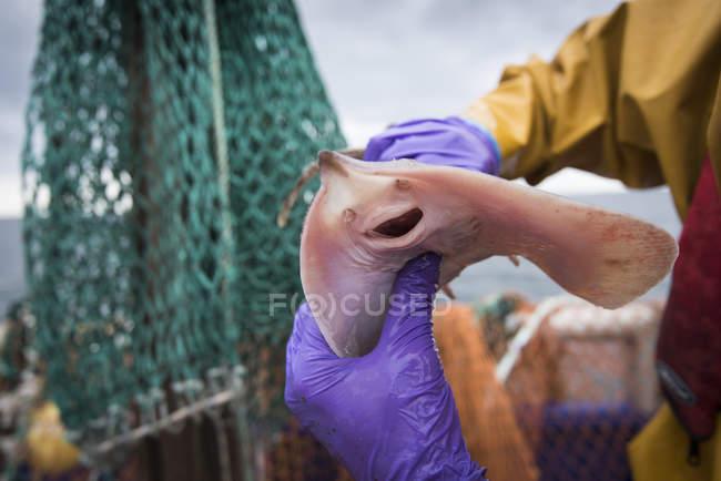 Échantillon de capture de poissons sur le pont du navire de recherche — Photo de stock