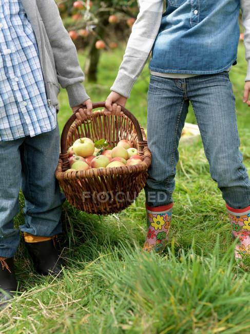 Fille et garçon tenant panier pomme — Photo de stock