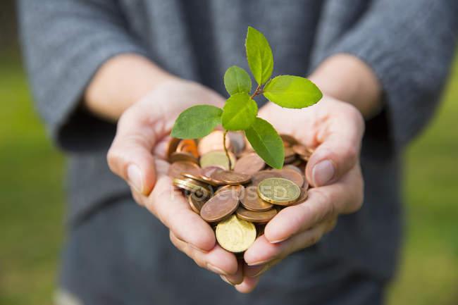 Vista frontale dei womans a coppa le mani che tengono semenzale dell'albero che cresce dalle monete — Foto stock