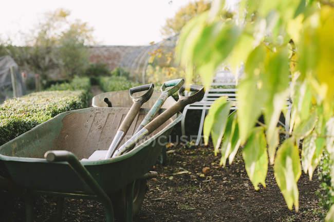 Wheelbarrow with spades in garden with green foliage — Stock Photo