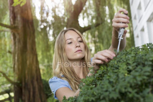 Arbusto de poda jovem no jardim — Fotografia de Stock