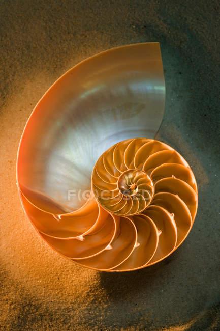 Metà delle coperture del nautilus sulla sabbia, Chiuda sul colpo — Foto stock