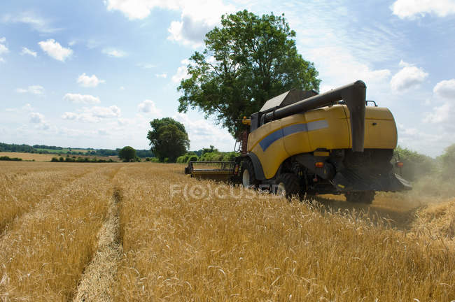 Rear view of combine Harvesting barley — Stock Photo