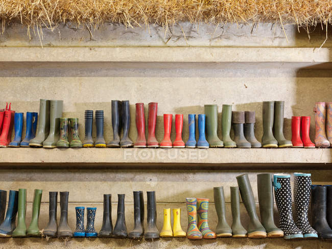 Wellington boots placed on shelves — Stock Photo