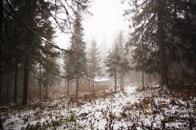 Bosque cubierto de nieve y cabaña en la niebla, Sarsy Village, Sverdlovsk Oblast, Rusia - foto de stock