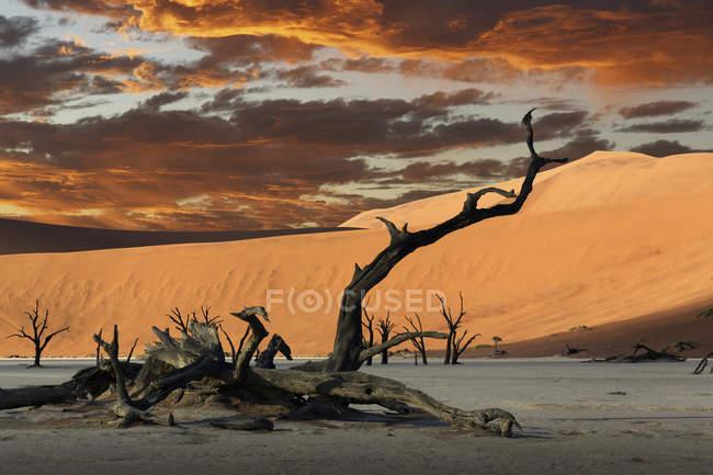 Albero caduto morto e dune di sabbia al tramonto — Foto stock