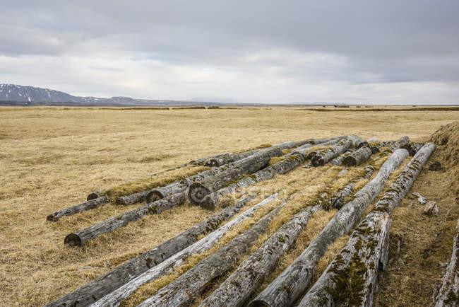 Campo asciutto con tronchi coperti di muschio sotto il cielo nuvoloso — Foto stock