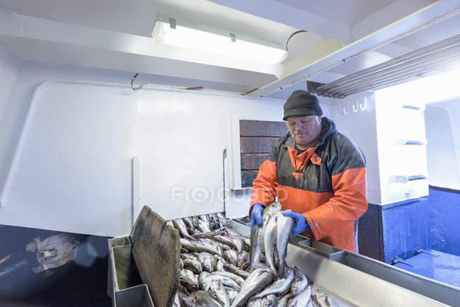 Fisherman sorting fish on trawler — Stock Photo