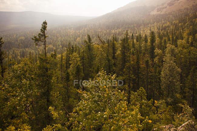 View of forest valley, Sarsy Village, Sverdlovsk Oblast, Russia — Stock Photo