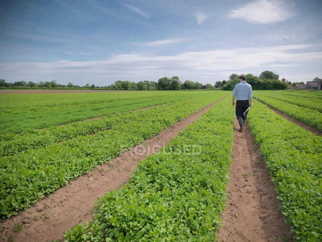 Travailleur en inspectant le champ des cultures sur la ferme aux herbes — Photo de stock