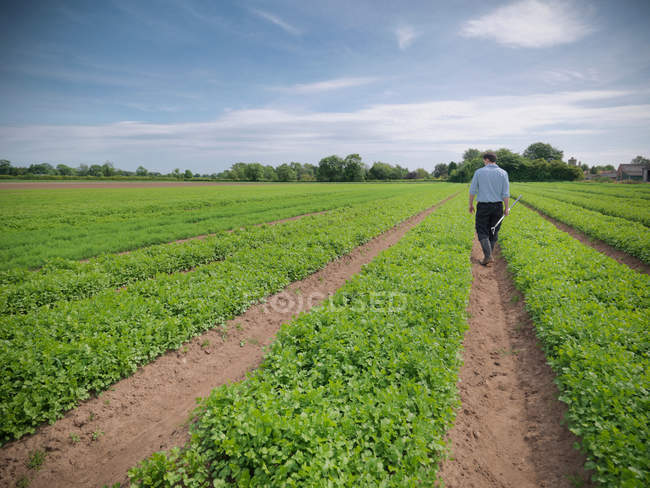 Worker inspecting field of crops on herb farm — Stock Photo
