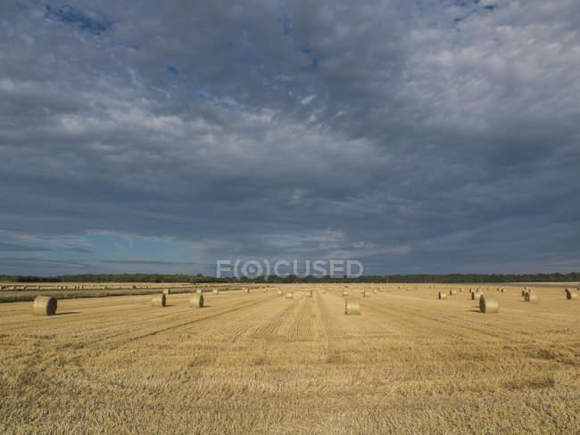 Campo de trigo colhido com palheiro — Fotografia de Stock