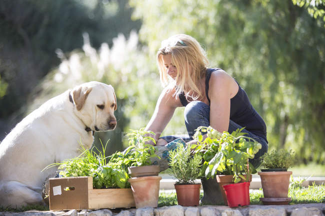 Labrador dog watching woman tending plants in garden — Stock Photo