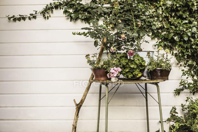 Beautiful potted plants against white wall of building — Stock Photo