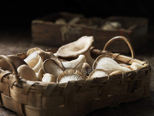 Fresh oyster mushrooms selection in basket — Stock Photo