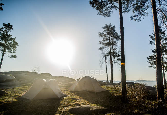 Two tents set beside sun lighted trees under blue sky — Stock Photo
