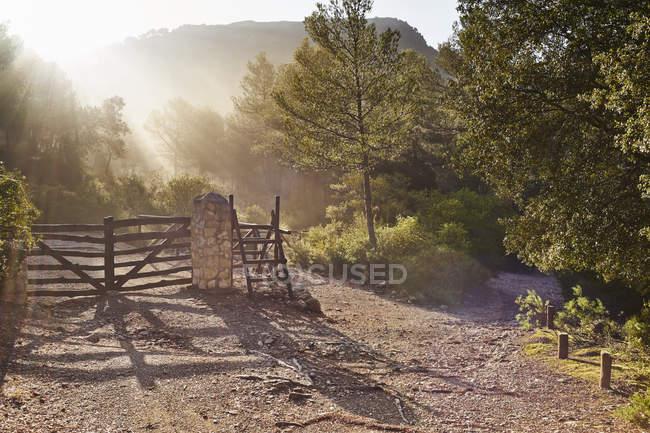 Recinzioni e verdi alberi in pieno sole — Foto stock