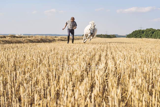 Человек тренирует скачущую белую лошадь в поле — стоковое фото