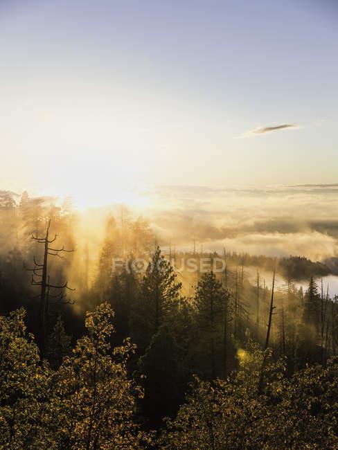 Vista elevata della nebbia sulla foresta di valle all'alba, Yosemite National Park, California, USA — Foto stock