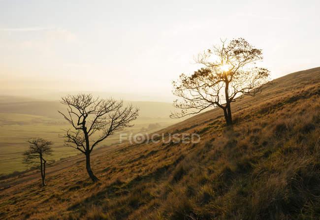 Alberi nudi su collina asciutta nella luce del tramonto — Foto stock