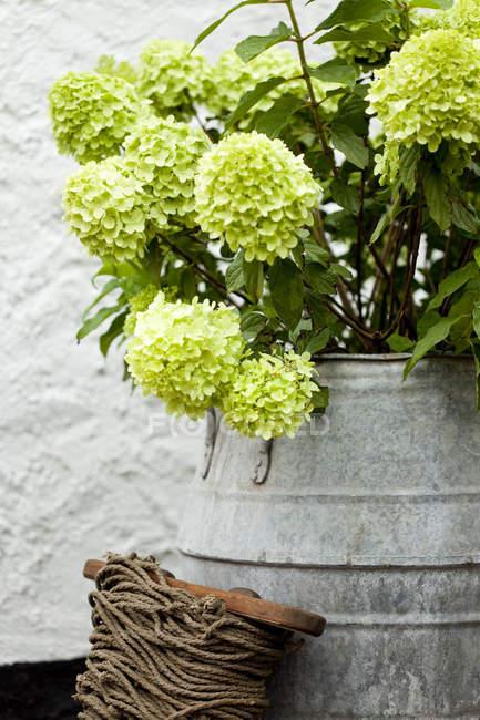 Винтажное молоко с зеленым растением на террасе — стоковое фото