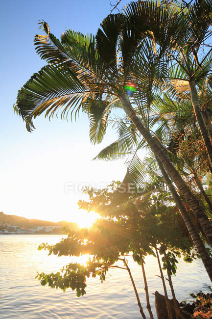 Palm trees and sunlight, Castries, St Lucia, Caribbean — Stock Photo