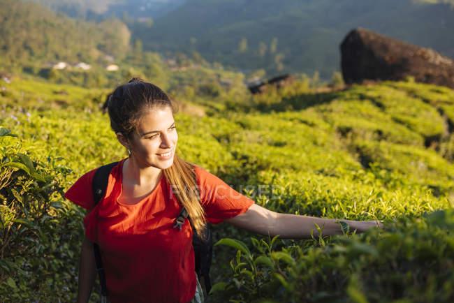 Молода жінка, торкаючись чай рослини у чайних плантаціях поблизу Munnar, Керала, Індія — стокове фото