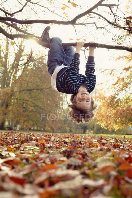 Menino brincando na árvore ao ar livre — Fotografia de Stock
