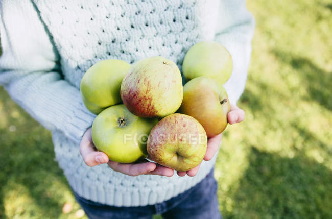 Cropped image of kid holding homegrown apples in hands — Stock Photo