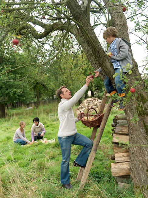 Padre e figlio raccolta di mele con la famiglia — Foto stock