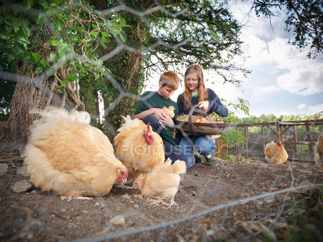 Two children collecting eggs with hens and chicks on farm, view through metal mesh fence — Stock Photo