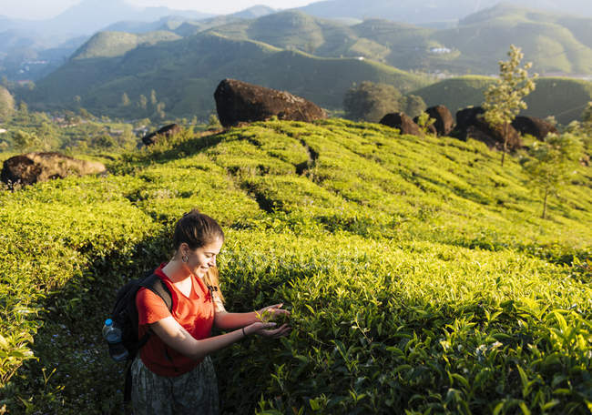 Young woman looking at tea plants in tea plantations near Munnar, Kerala, India — Stock Photo