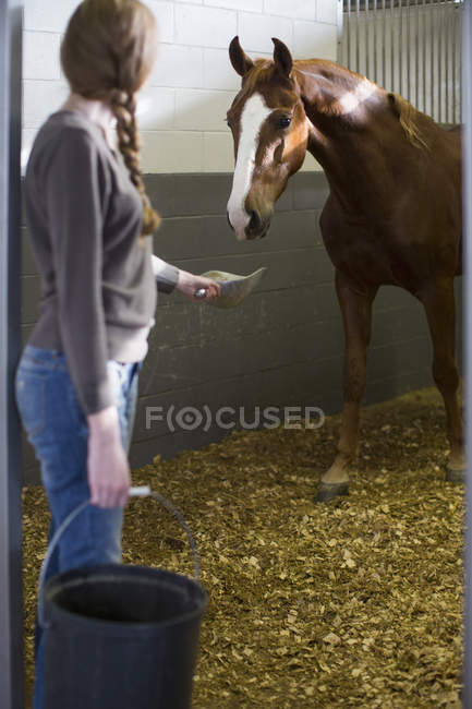 Stallhündin füttert Pferd im Stall — Stockfoto