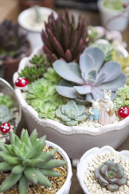 Succulent plants in pots with decorations, close up shot — Stock Photo