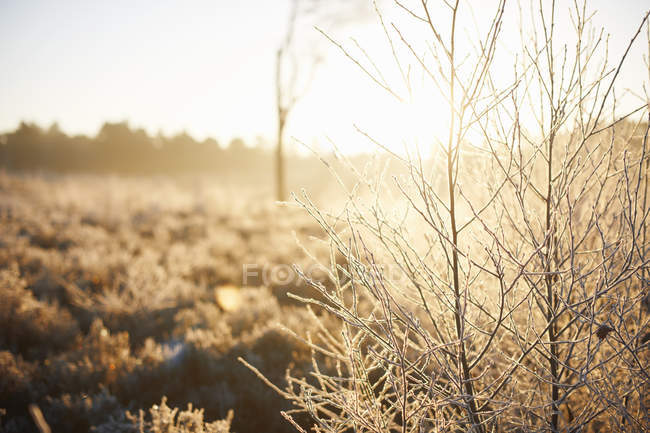 Sunlit rural winter scene at daytime — Stock Photo